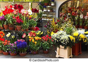 blomsterhandler, shop, hos, farverig, forår blomstrer
