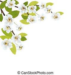 blomstrande, träd, brunch, med, fjäder, flowers., vektor, illustration.