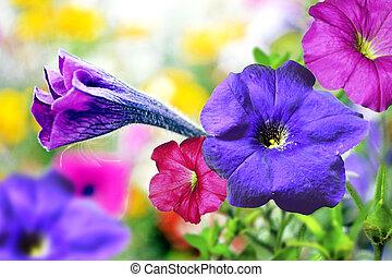 Blomstrar, härlighet, morgon