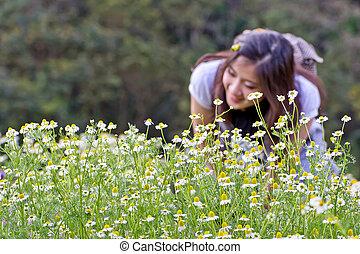 Blomstrar, Kamomill