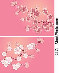 blomstre, kirsebær, sæt, cards