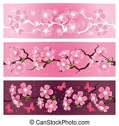 blomstre, kirsebær, set., blomster, banner