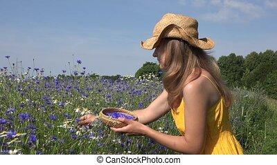 Blond girl in yellow dress gather cornflower flower herbs blooms. 4K