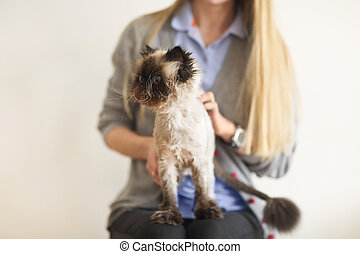 Blond woman with her Persian Cat Extreme