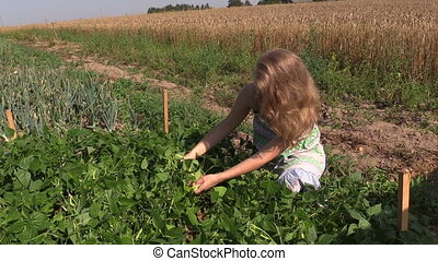 girl reap snap beans - blonde girl reap snap beans in...