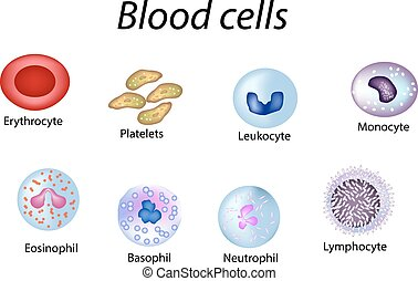 Blood cells. Set of colored cells. Red blood cells, platelets, leukocytes, lymphocytes, eosinophils, neutrophils, basophils, monocytes. Infographics. Vector illustration on isolated background
