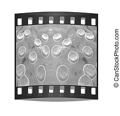 Blood cells. The film strip