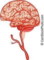 Blood clot in human brain