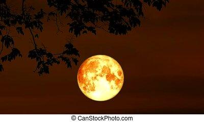 blood harvest moon Moon back on dark cloud on silhouette dry tree and the night sky