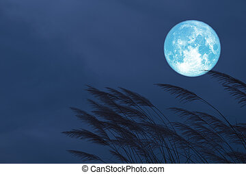 blood strawberry moon on night sky back silhouette grass flowers