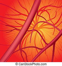 Circulatory system. Vector Illustration (EPS v.8.0)