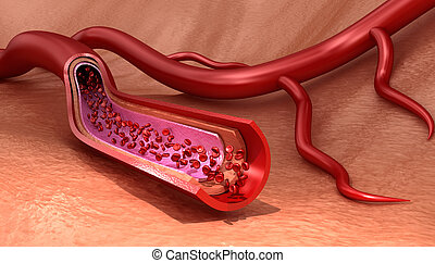 Blood vessel sliced macro with erythrocytes , Medically...