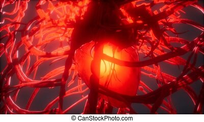 Blood vessel system and heart