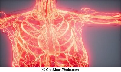 science anatomy scan of human blood vessels