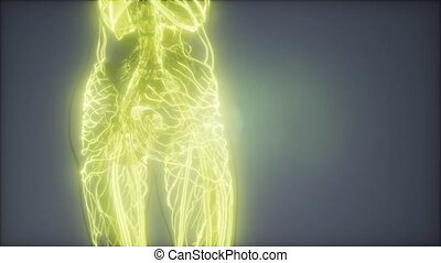 Blood Vessels of Human Body - science anatomy scan of human...