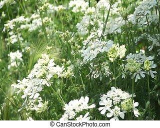 blooming, белый, цветы, ветер, букет, перемещение