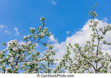 Blooming apple tree against blue sky with copy space