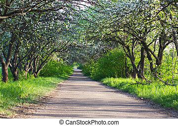 blooming apple tree alley.