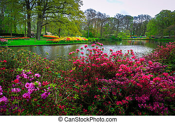 Blooming azaleas and colorful spring flowers in Keukenhof park, Netherlands
