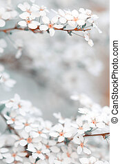 Blooming blossoms in spring season with smooth bokeh background