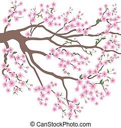 blooming branch of sakura