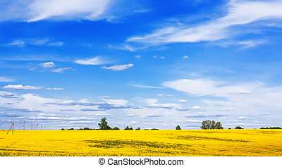 Blooming canola field