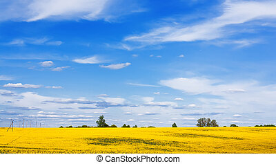 Blooming canola field and beautiful sky