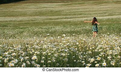 Blooming chamomile field