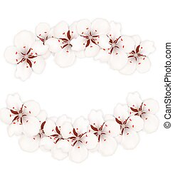 Blooming Cherry Blossom Isolated on White Background
