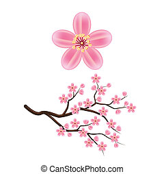 Blooming cherry branch vector illustration