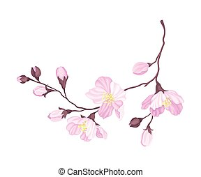 Blooming Cherry Branch with Tender Pink Flower Blossoms Vector Illustration
