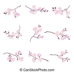 Blooming Cherry Branches with Tender Pink Flower Blossoms Vector Set