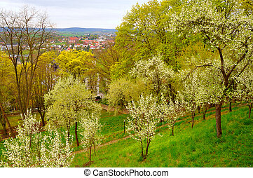 Blooming cherry trees in the garden near Men Monastery on a Frauenberg in Fulda, Hessen, Germany