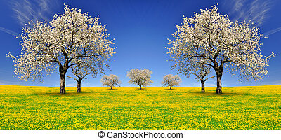 blooming cherry trees on dandelion field