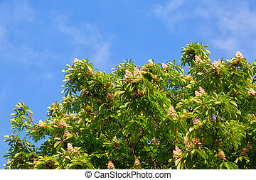 Blooming chestnut tree against the bright blue sky