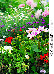 Blooming colorful flowerbeds in Versailles gardens, France.