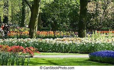 Blooming daffodils and tulips