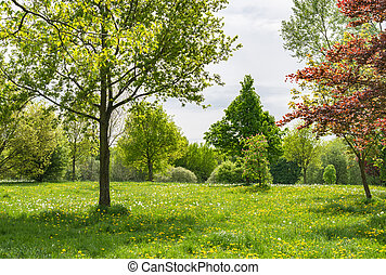 Blooming dandelion on green meadow in springtime - White and...