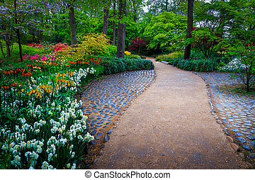 Blooming diverse colorful spring flowers in the Keukenhof park, Netherlands