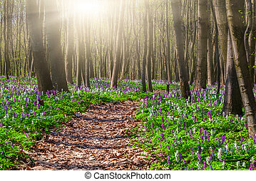 Blooming fields of flowers in spring forest