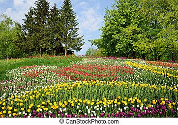 Blooming flowerbed in the spring park