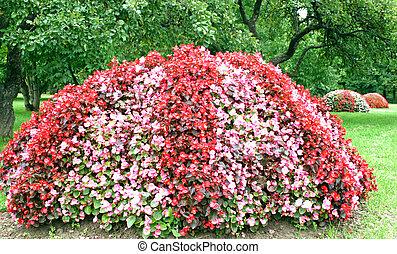 Blooming flowers in garden