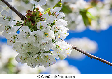 Blooming flowers in spring