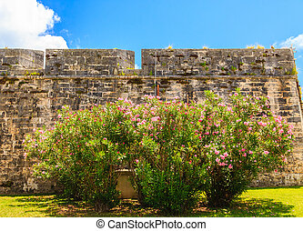 Flowers on Old Stone Wall
