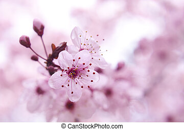 Blooming fruit tree - Close up of the blooming branch of the...