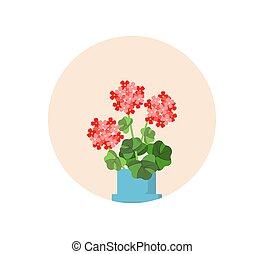 Blooming geranium bush