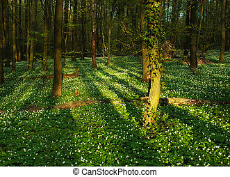 Blooming green forest in the rays of dawn sun