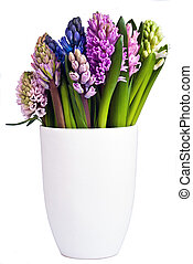 blooming hyacinths in a vase - many flowering hyacinths in a...