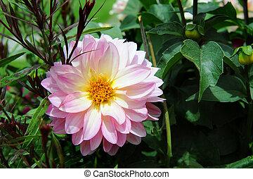 Blooming in a Garden