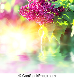 Blooming lilacs - The branch of lilac blossoms. Background...